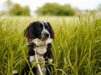 Mitnahme von Hunden in Wald und Flur